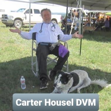 Carter Hounsel vet