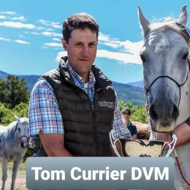 tom currier vet